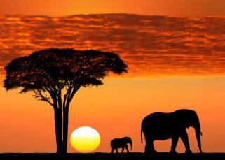 Pôr do sol Serengeti
