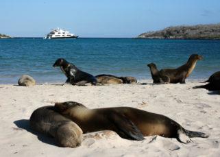 leões marinhos Galápagos
